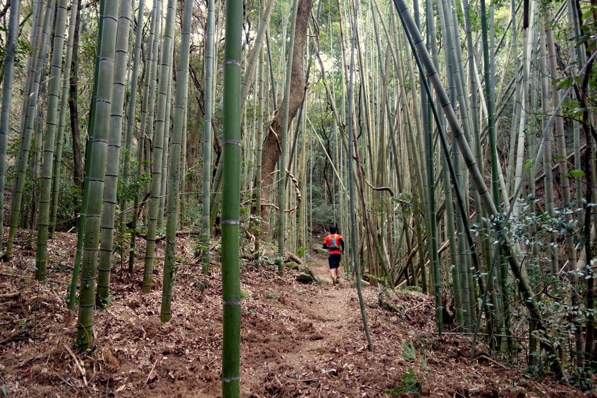【コース紹介】玉名市民の憩いの山、小岱山のトレラン大会コース~Shodai Adventure Mountainコース~