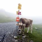 【レースレポート】スイスアイアントレイル2015(Swiss Irontrail-T201-)~当日編(CP13 ~Weisshorn(177km地点))~