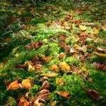 【練習】秋の脊梁・白鳥山~水上越で廃道探索ハイク